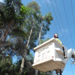 Power-Line Clearance Services
