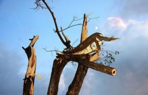Dead fallen tree