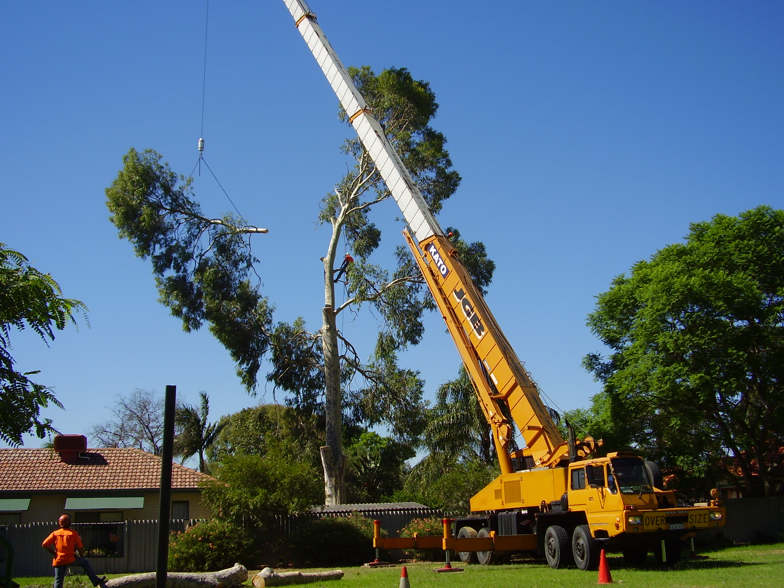 WA TreeWorks team removing a tree  with crane