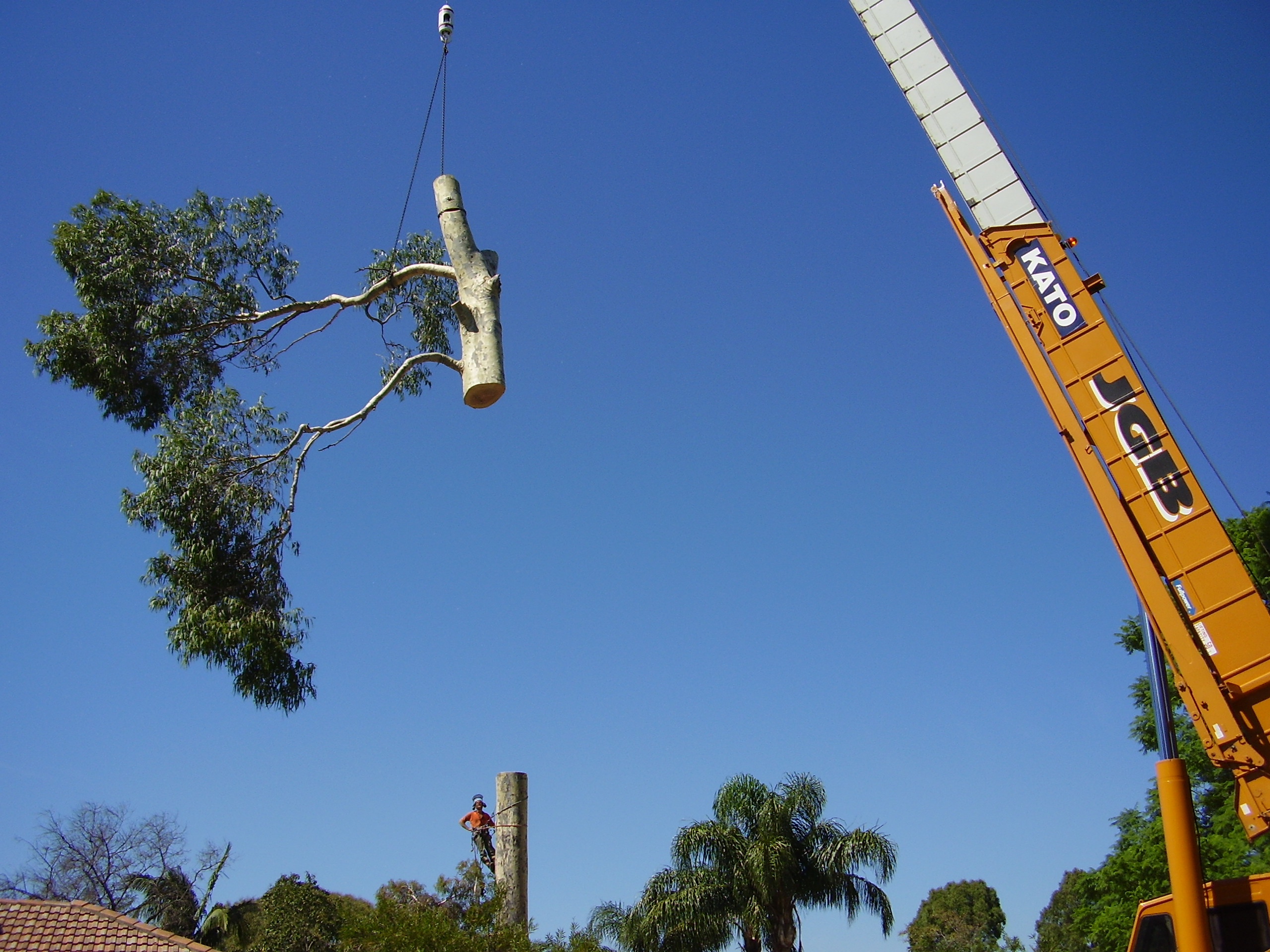 WA TreeWorks team removing a tree