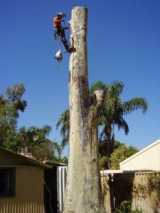 WA TreeWorks Tree Services