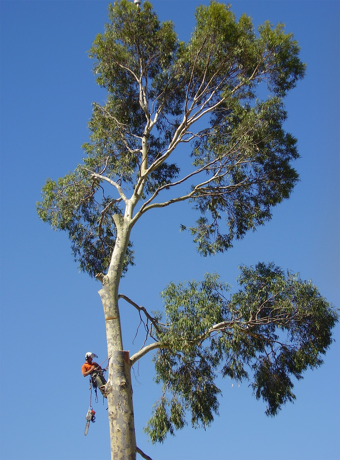 WA TreeWorks Tree  Removal Services