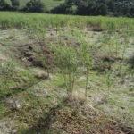 WA TreeWorks Weed Control Service
